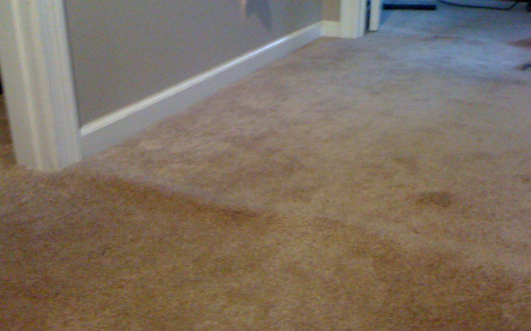 Arlington, TN Carpet Stretching