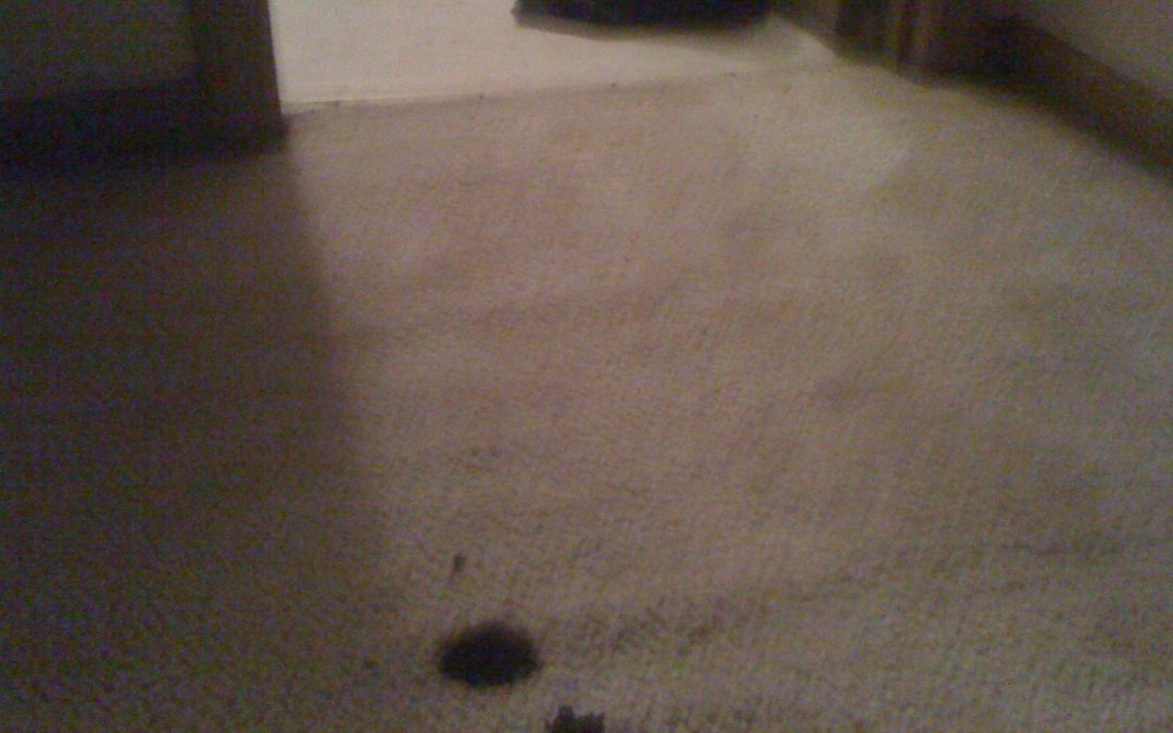 Memphis Carpet Burn and Transition Repair