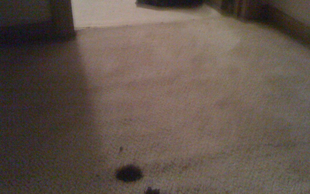 Memphis Carpet Burn and Transition Repair