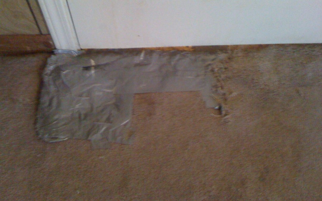 Bartlett, Tn Pet Damage Repair