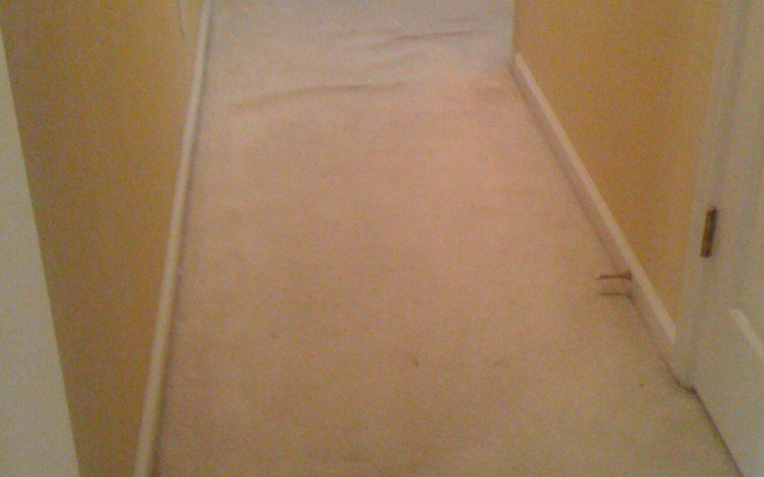 Memphis Carpet Stretching