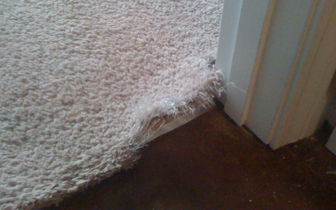 Memphis Carpet Pet Damage Repair