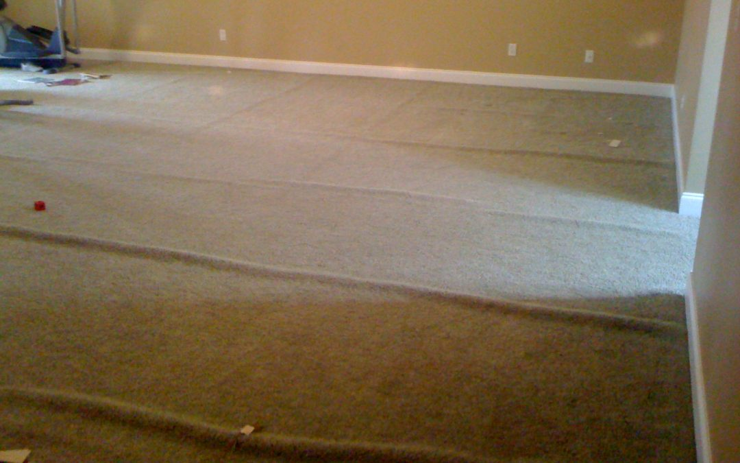 Olive Branch Carpet Stretch