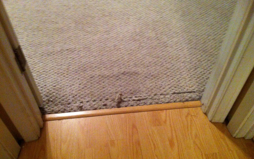 Arlington, TN Carpet Transition Repair