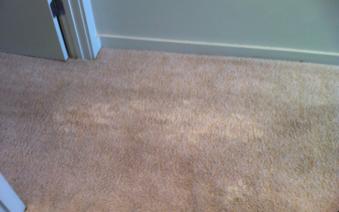 Carpet Bleach Stain in Memphis