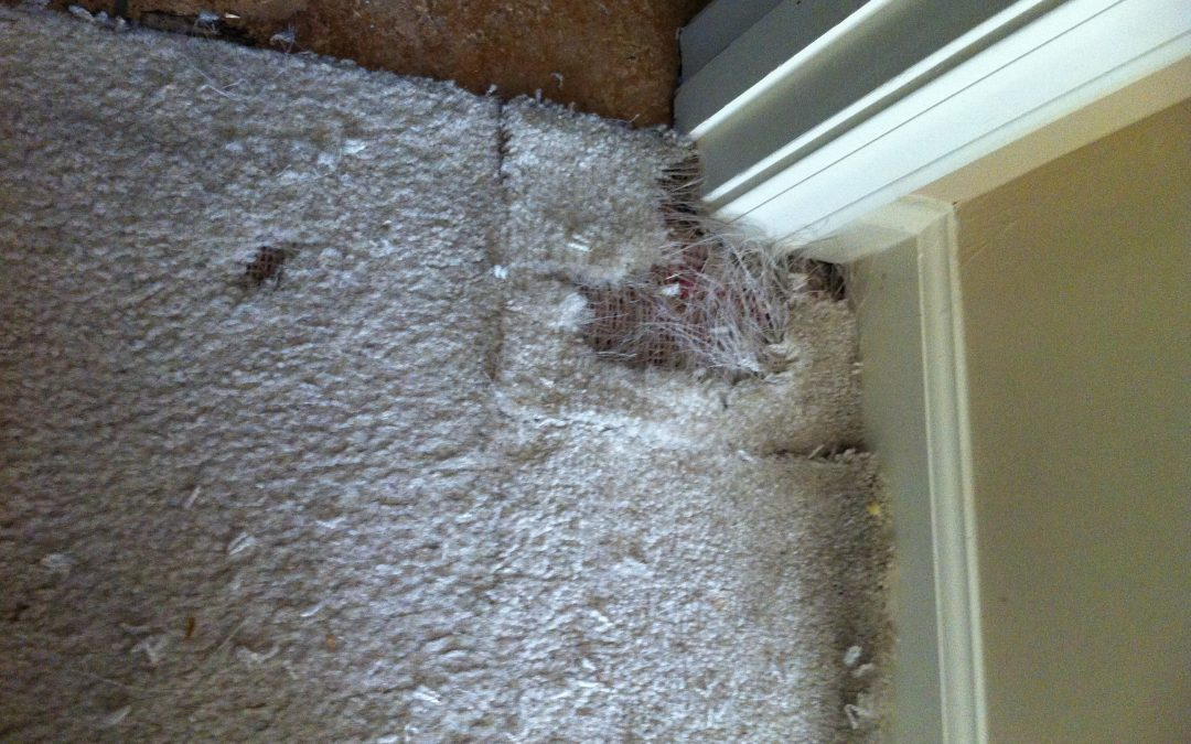 Bartlett Carpet Pet Damage Repair